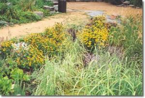 park rain garden